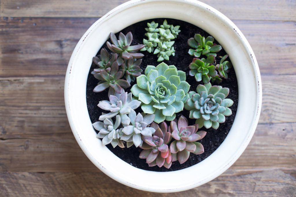 succulant-decor1